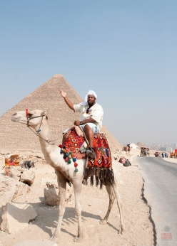 Giza, Great Pyramids, Camel, Cairo, Egypt